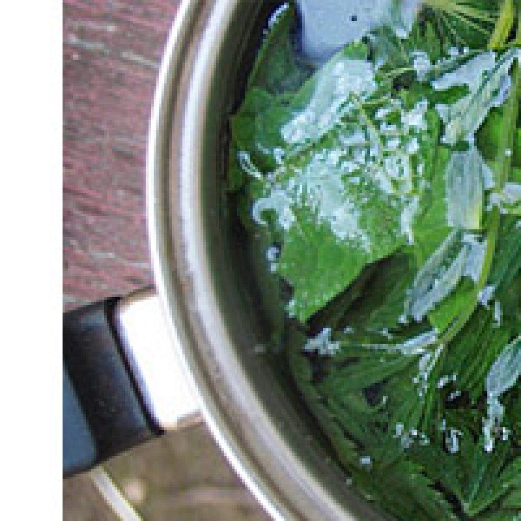 Рецепт ополаскивателя с крапивой