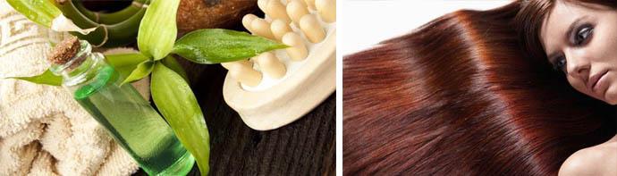 Чайное дерево для красивых волос