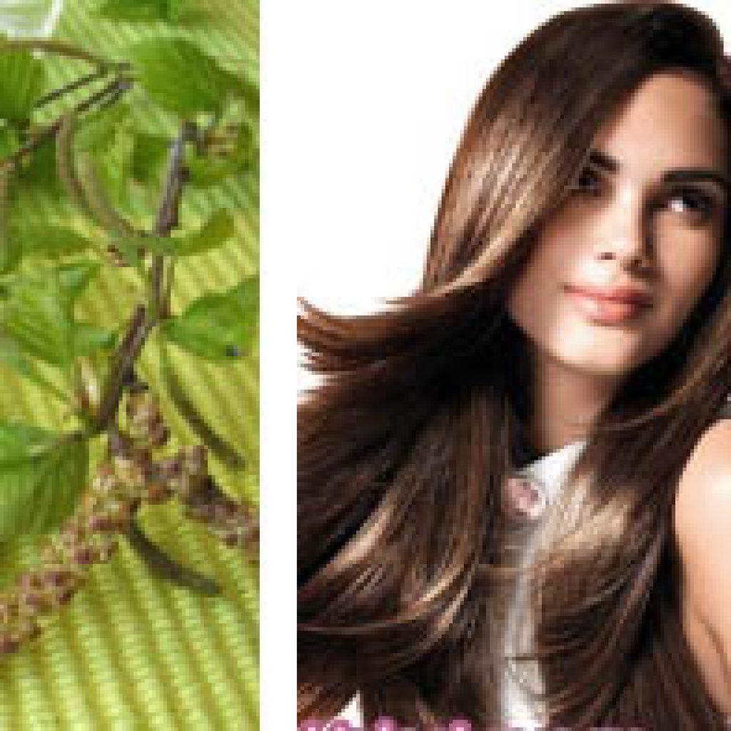 Береза для укрепления волос