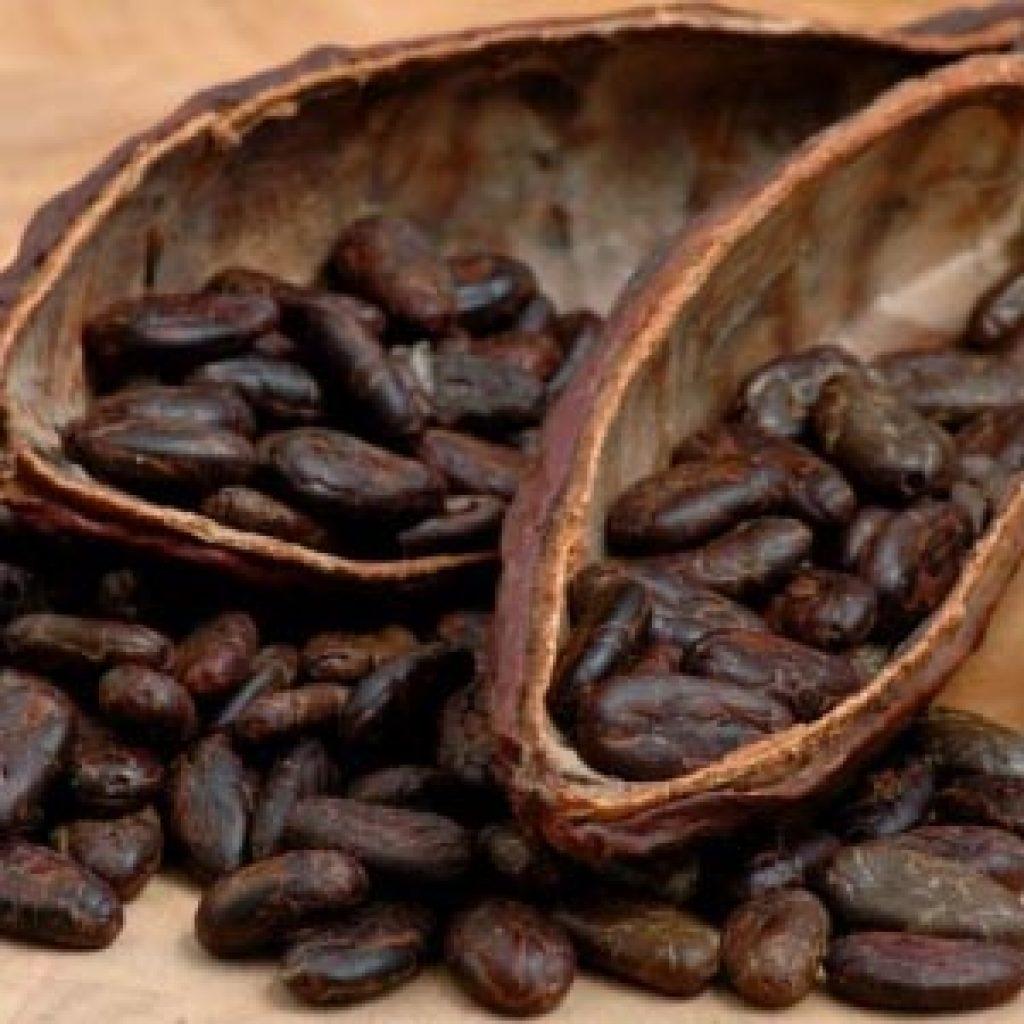 Масло из плодов какао для ухода за волосами