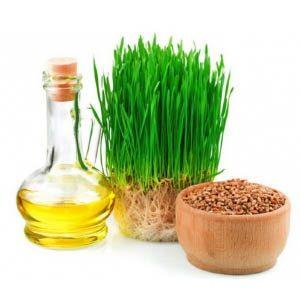 Применение масла ростков пшеницы для волос